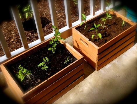 crated plants
